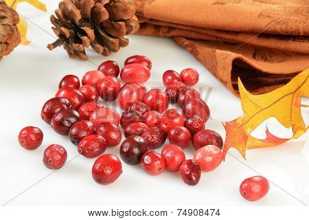 Freeze Dried Cranberries