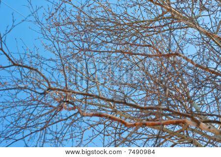 Sky Among The Trees