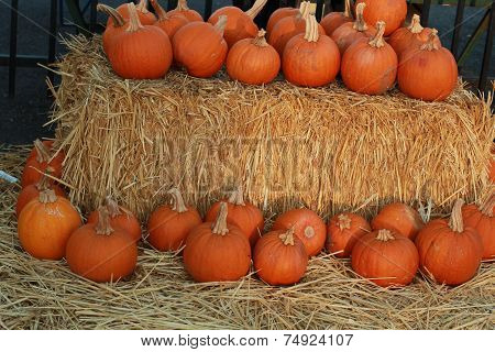 rows of pumpkins on hay
