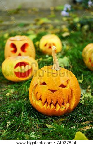 Pumpkins for holiday Halloween on grass background