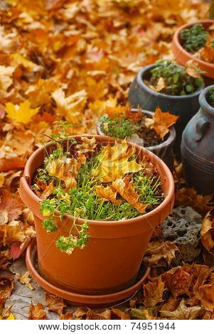 Pots of harvested herbs surrounded by autumn leaves
