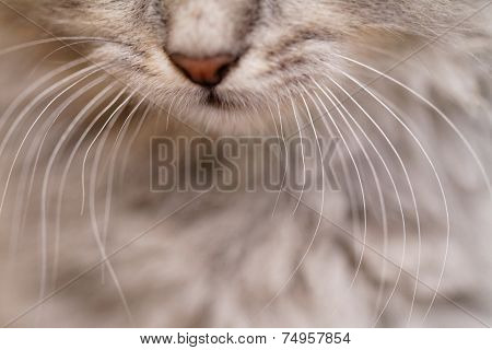 Cat Nose Close Up
