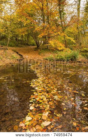 Autumn Leaves In Burn Vertical