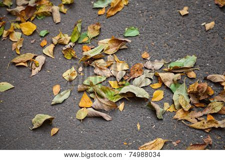 Fallen Colorful Autumnal Leaves On Urban Asphalt Road