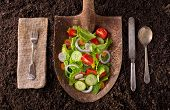 image of rich soil  - Organic farm to table healthy eating concept on soil background - JPG
