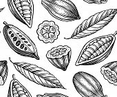 stock photo of cocoa beans  - engraved pattern of leaves and fruits of cocoa beans - JPG