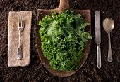 foto of rich soil  - Organic farm to table healthy eating concept on soil background - JPG