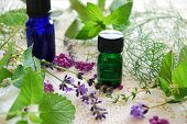 pic of essential oil  - essential oils with herbal leaves and lavender - JPG
