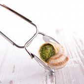 image of escargot  - escargot - JPG