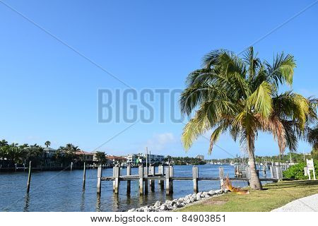 Fishing pier with Palm trees