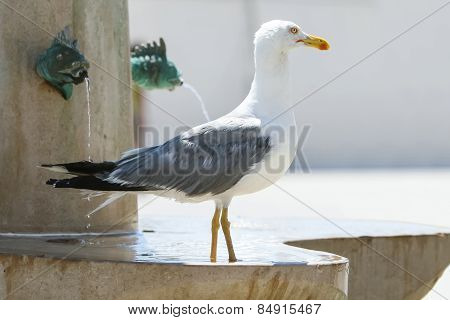 Side View Of Seagull On Fountain