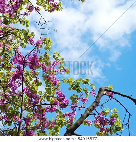Branches of lilac flowers