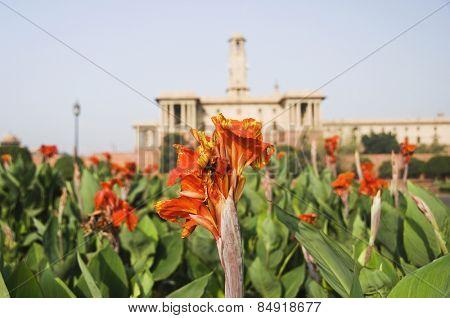 Flowers in a formal garden, Mughal Garden, Rashtrapati Bhavan, New Delhi, India