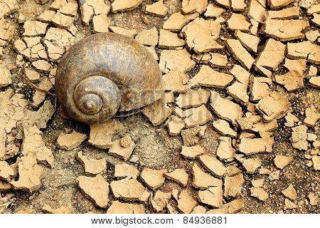 Snails Died On Dry Soil
