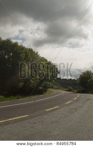 Trees at the roadside, Tralee, Ring Of Kerry, County Kerry, Republic of Ireland