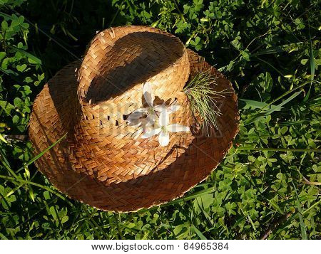 Lost Straw hat
