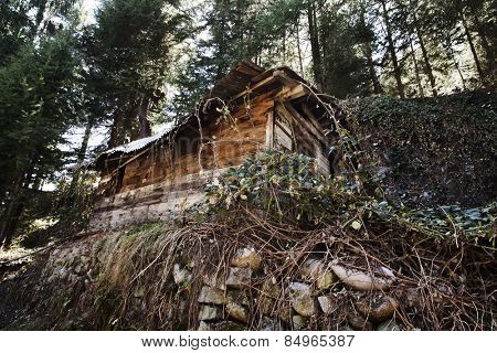 Hut in a forest, Manali, Himachal Pradesh, India