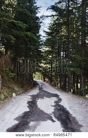 Road passing through a forest, Manali, Himachal Pradesh, India