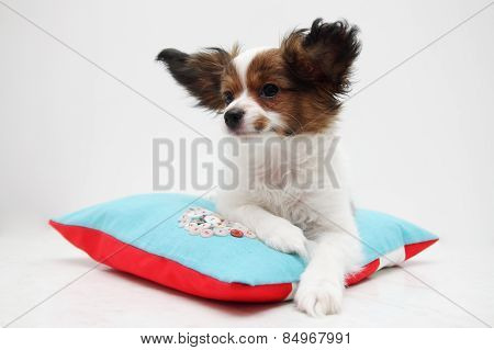 Puppy Lying On A Pillow