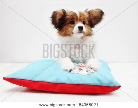 Puppy Lying On A Bed