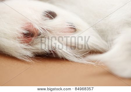 Paw Of A Dog