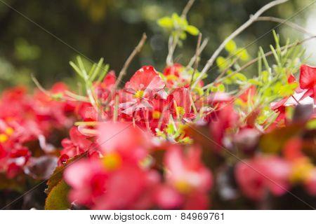 Close-up of flowers, Ravello, Amalfi Coast, Salerno, Campania, Italy