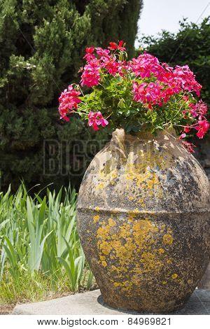 Close-up of a potted plant, Ravello, Amalfi Coast, Salerno, Campania, Italy