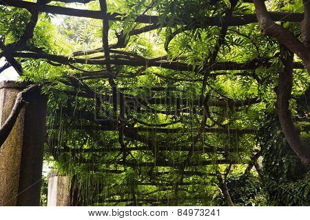 Tree canopy, Villa Cimbrone, Ravello, Province of Salerno, Campania, Italy