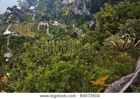 Trees on a hill, Villa Cimbrone, Ravello, Province of Salerno, Campania, Italy