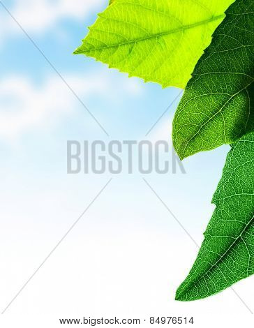 Green leaves border, fresh plant on sky background, abstract natural pattern, copy space, spring time season concept