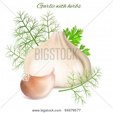 Garlic with herbs. Vector illustration.