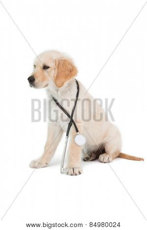 Sitting dog looking to the side on white background