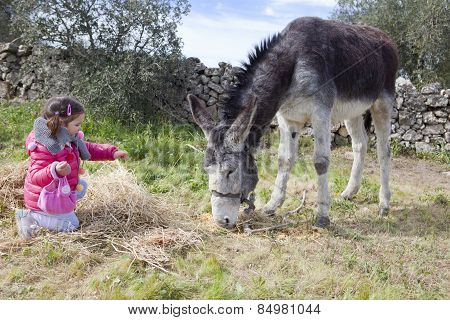 Toddler And Donkey