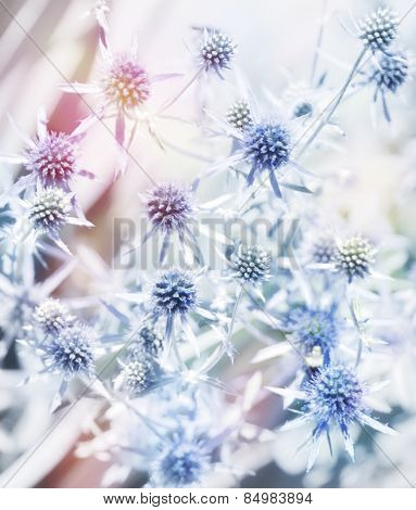 Digital Painting Of Blue Flowers.Soft Focus