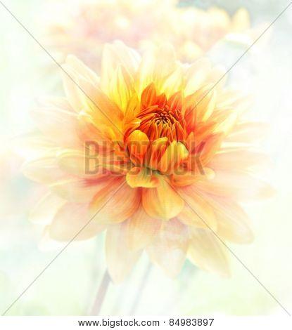 Digital Painting Of Dahlia Flowers.Soft Focus