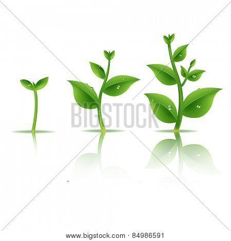 Plant Set With Gradient Mesh, Vector Illustration