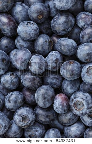 Freshly picked organic blueberries