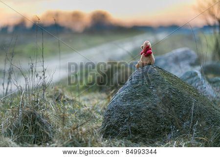 Teddy Bear In Landscape
