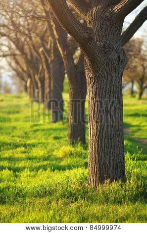 Green grass in park. Spring mood time.