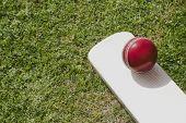 stock photo of cricket bat  - Cricket ball on a cricket bat in a field - JPG
