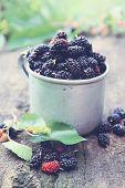 image of mulberry  - fresh mulberries in an old metal mug - JPG