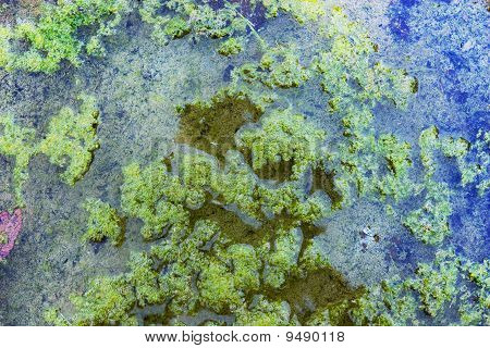 Bog With Duckweed