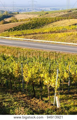 view of autumnal vineyards near Jetzelsdorf, Lower Austria, Austria