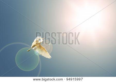 Flying Birds On Blue Sky