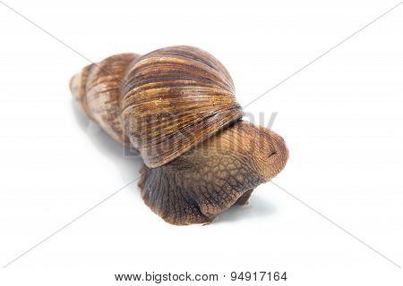 Photo of hidden snail