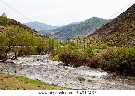 The River In The Altai Mountains