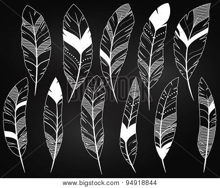 Vector Set of Chalkboard Feathers and Feather Silhouettes