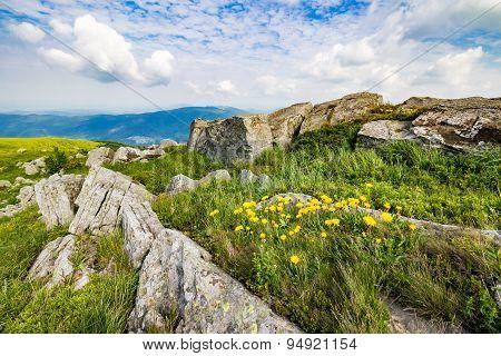 Dandelions Among The Rocks On Hillside