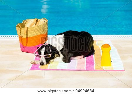 Dog Sunbathing At Poolside