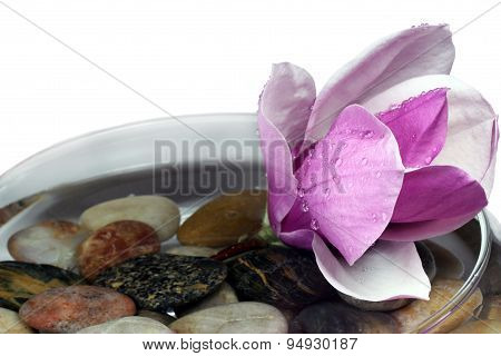 Magnolia Blossom And Rocks Isolated On White